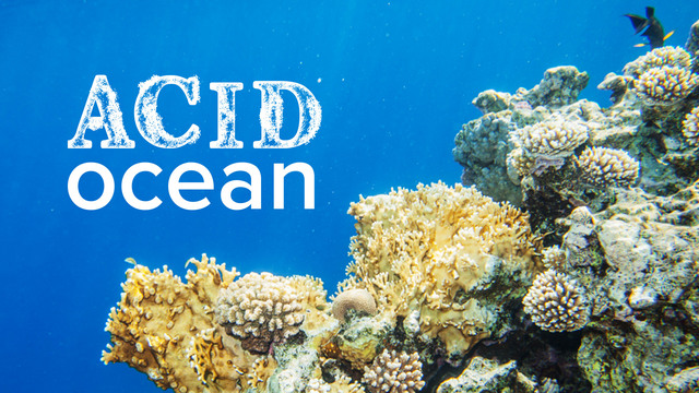 Acid Ocean